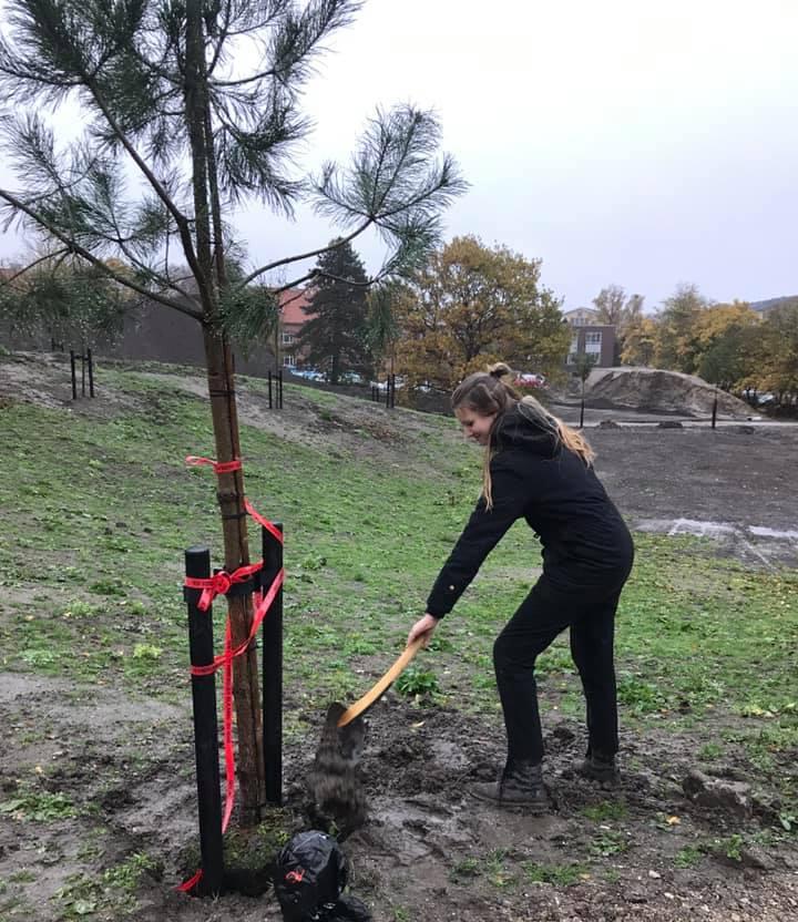 Rebekka planter et fyrtræ i parken på MarselisborgCentret